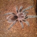 My Spiders
