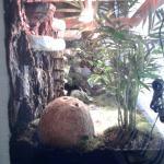 Terarium