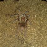 паяците ми